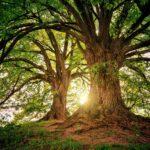 """Piantarle non basta, bisogna lavorare """"insieme"""" alle foreste"""
