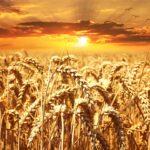 Climate change: a rischio un quarto dei raccolti del pianeta