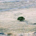 Cinque modi in cui l'Uomo inaridisce la terra
