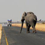 Uomini e animali: un conflitto aggravato dal clima che cambia